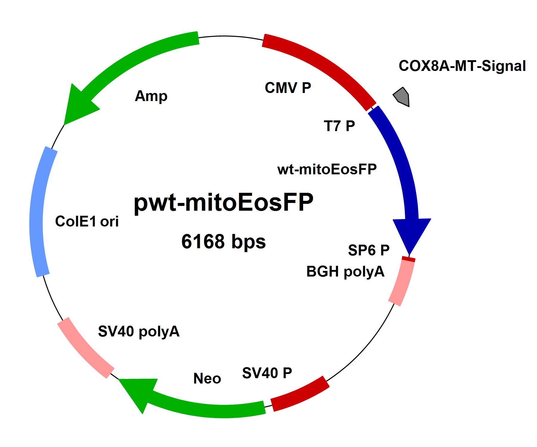 pwt-mitoEosFP, with mitochondrial targeting signal, 10µg - Click Image to Close